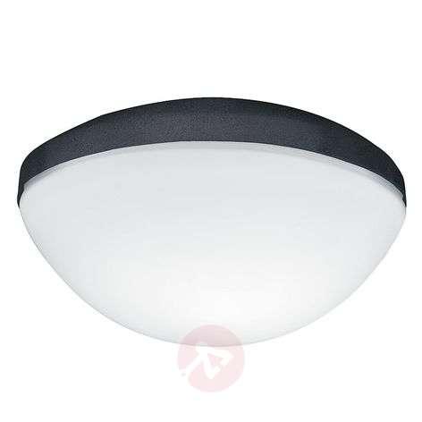 Hunter Contemporary light for fans